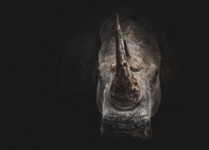 Spaima e irationala rhino fear overcome
